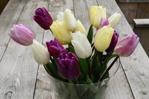 Tulipa Flag Mix