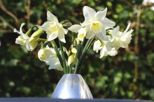 Narcissus Tresamble