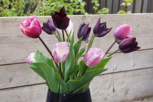 Tulipa Bosvruchten mix