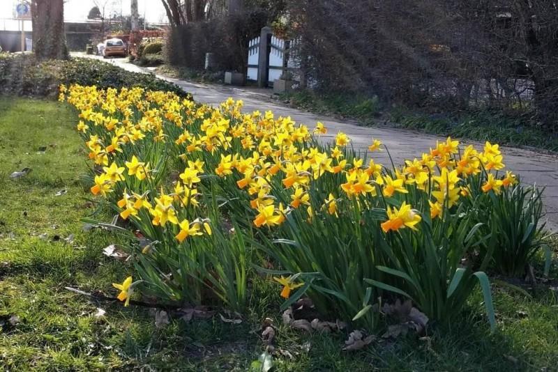 Narcissus Jetfire - BIO