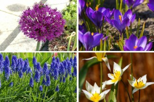 Collection Happy Bee Spring Garden - BIO