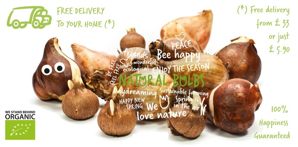 Organic flower bulbs